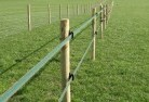 Almonds Electric fencing 4
